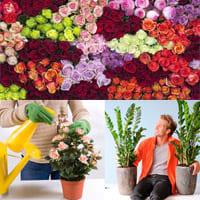 Какие цветы самые популярные?